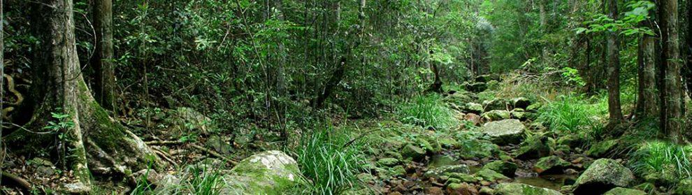 Amamoor State Forest