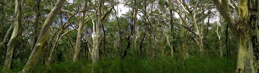 Mooloolah National Park