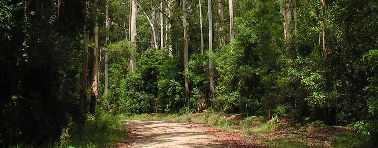 Imbil State Forest