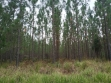 Beerwah State Forest-05