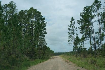 Beerwah State Forest-06
