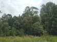 Beerwah State Forest-08