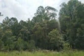 Beerwah State Forest