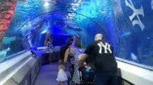 Sea Life Sunshine Coast Aquarium