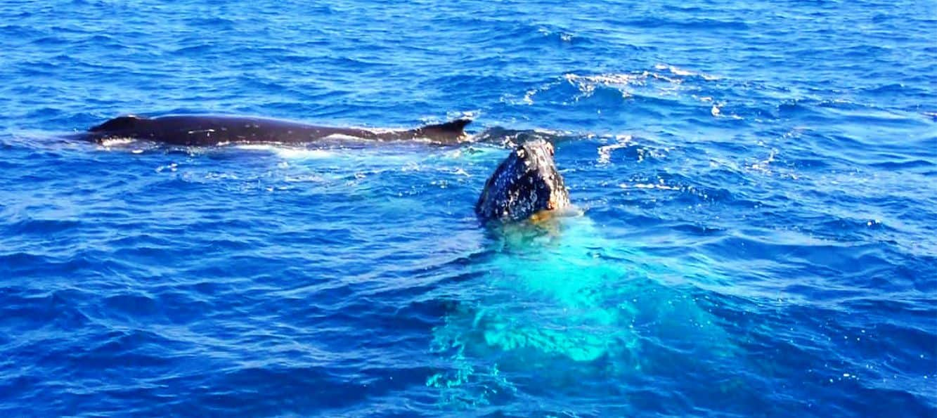 Whale Watching 01