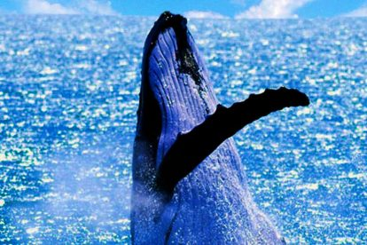 Whale Watching 05
