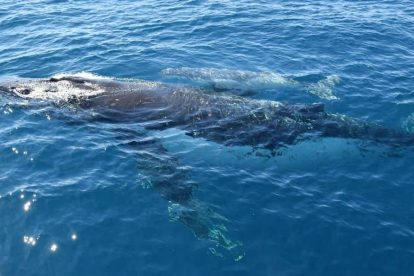 Whale Watching 07