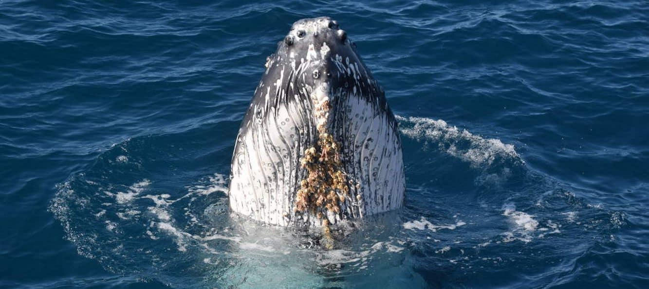 Whale Watching 08