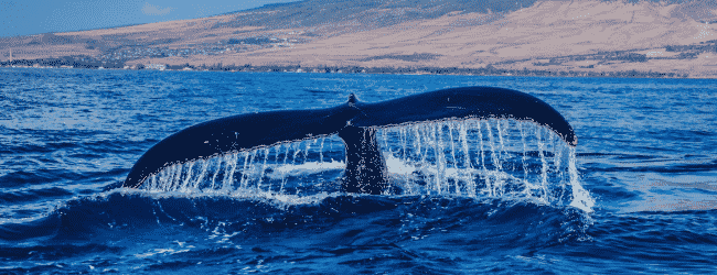 Must-visit Spots For Whale Lovers In Australia